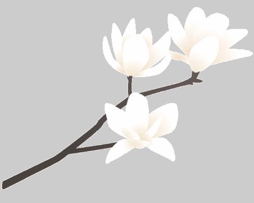 mokuren